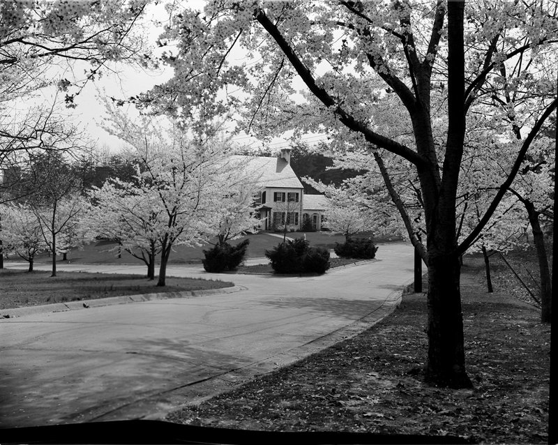 A368-3 Kenwood Cherry Blossoms 1939.jpg :: 1939 Kenwood Cherry Blossoms