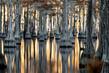 Among the Cypress(1).jpg