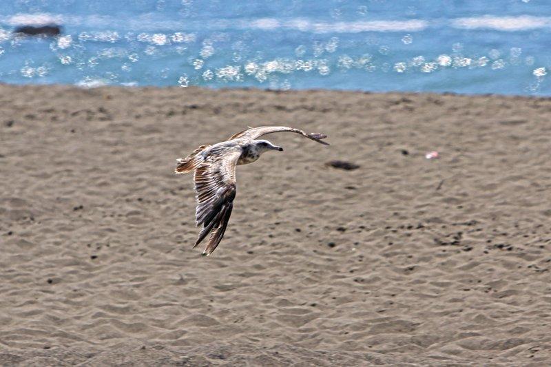 Sea Bird.jpg