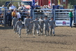 Marysville Stampede 2017 Day 2 007.jpg