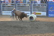 Marysville Stampede 2017 Day 2 1502.jpg