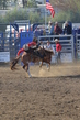 Marysville Stampede 2017 Day 2 730.jpg
