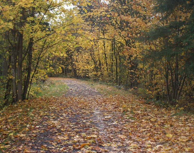 Maple Valley 3.jpg :: KONICA MINOLTA DIGITAL CAMERA