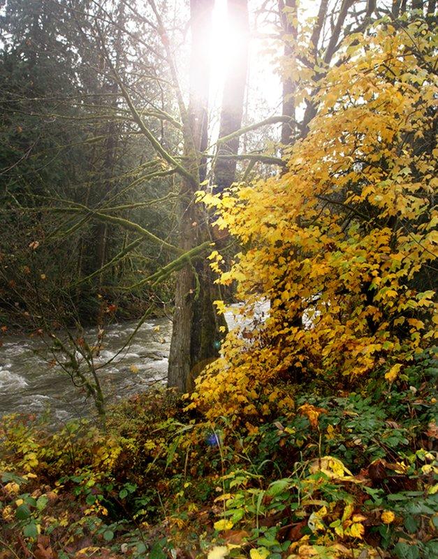 Snoqualmie Valley 4.jpg :: KONICA MINOLTA DIGITAL CAMERA