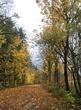 Snoqualmie Valley 3.jpg