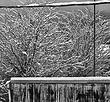 winter 2012.jpg