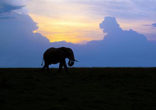 Elephant Grazing At Sunset In Masai Mara.jpg