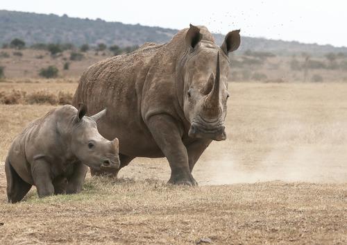 Rhino and Young.jpg