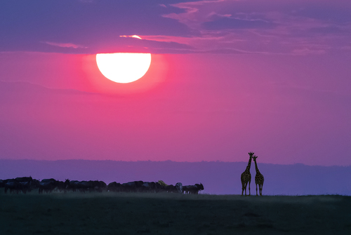 Sundown On The Massai Mara.jpg