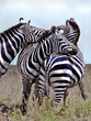 AA6-zebra-relaxation-sky-final.jpg