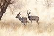 Kudu164A4535(1).jpg