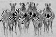 The Zebra Girls in BW.jpg