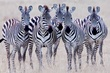 Zebra Girls close up.jpg