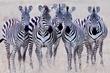 Zebra Girls close up.jpg