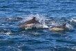 dolphin-run-034.jpg