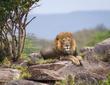 Lion King in Throne.jpg