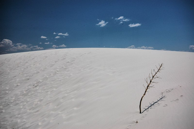 WS-12.jpg :: The Dunes can reach heights of one hundred feet and remain cool even when temperatures reach 120F