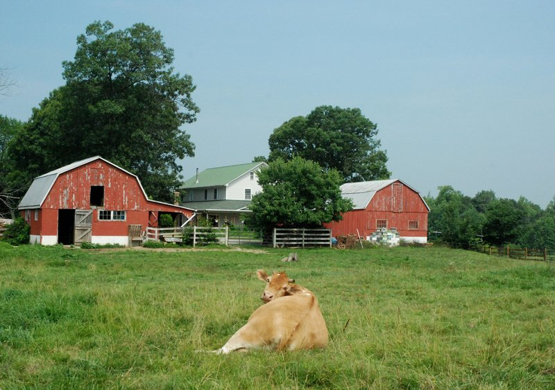 Maryland farm life.jpg