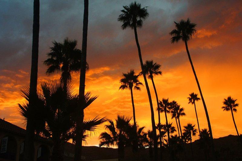 Palms.jpg :: SONY DSC
