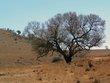 Sable Under Tree.jpg