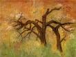 Fall tree small.jpg