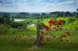Hunter Valley Wine Country Australia.jpg