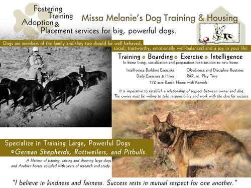 Missa Melanies Dog Sitting - Postcard Mailer.jpg