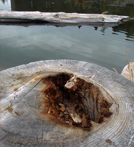 Mt Charleston tree stump with water 01 copy.jpg