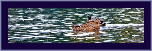 River Raft Ducks 01 copy.jpg
