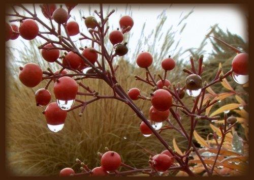 berries and drops 02 copy.jpg