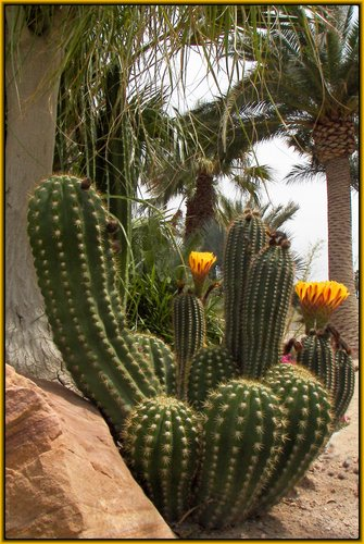 bowing cactus copy.jpg