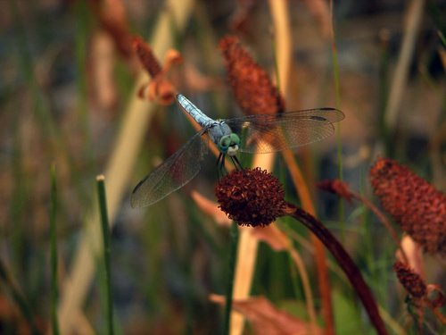 dragonfly 031.jpg