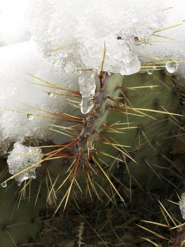 needles on ice.jpg