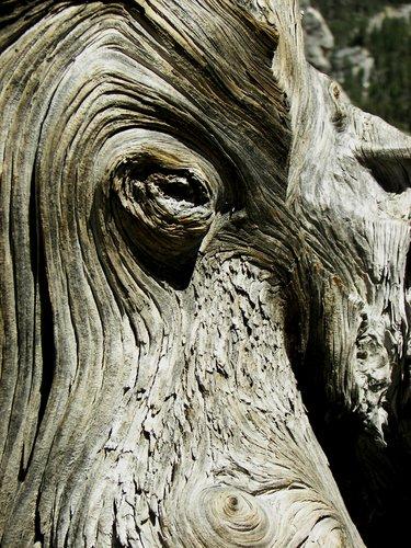 wood nymph 01.jpg