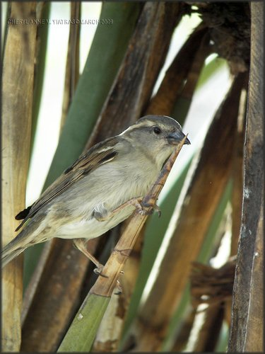 wooded finch copy.jpg