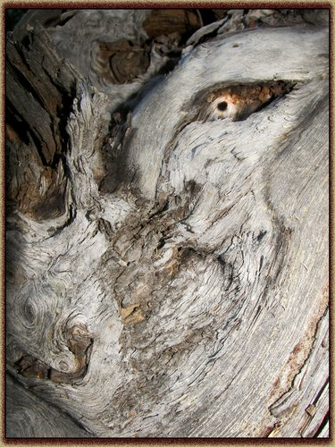 woodman copy.jpg