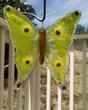 Light green Yellow brown garden Butterfly.jpg