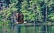Eagle over Lake Ann 10x16s.jpg