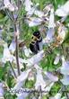 bumble bee in flowers8x12s.jpg