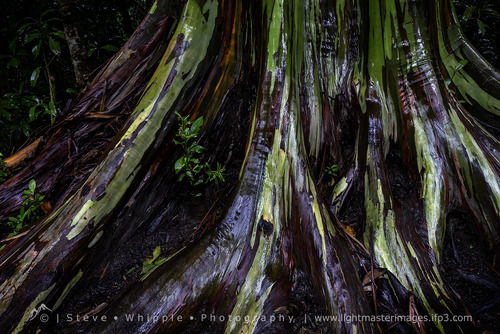Root of the Rainbow-5487b.jpg