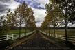 Country Lane in Fall.jpg
