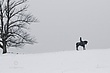 Gettysburg Winter Silhouette.jpg