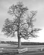 gettysburg tree.jpg