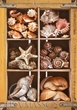 2481-Shell-Collection-1v-2.jpg