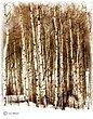 2544-Aspen-Grove-1.jpg