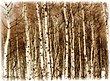 2545-Aspen-Grove-2.jpg