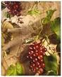 Grapes 2060 .jpg