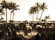 Lava--Palms-1.jpg