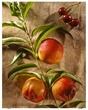 Nectarines 2062.jpg