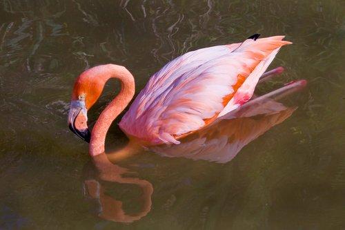 flamingo_0285-4x6-240.jpg